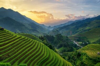panorama rice fields